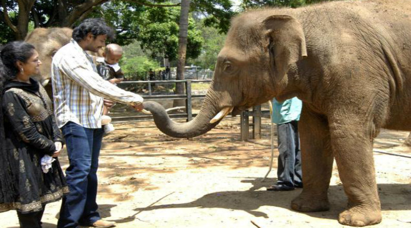 Challenging_Star_Mysore_Zoo