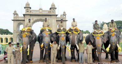 DASARA-ELEPHANTS-S14
