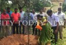 Couple celebrate wedding anniversary by planting saplings