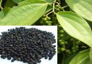 Karnataka leads in pepper production